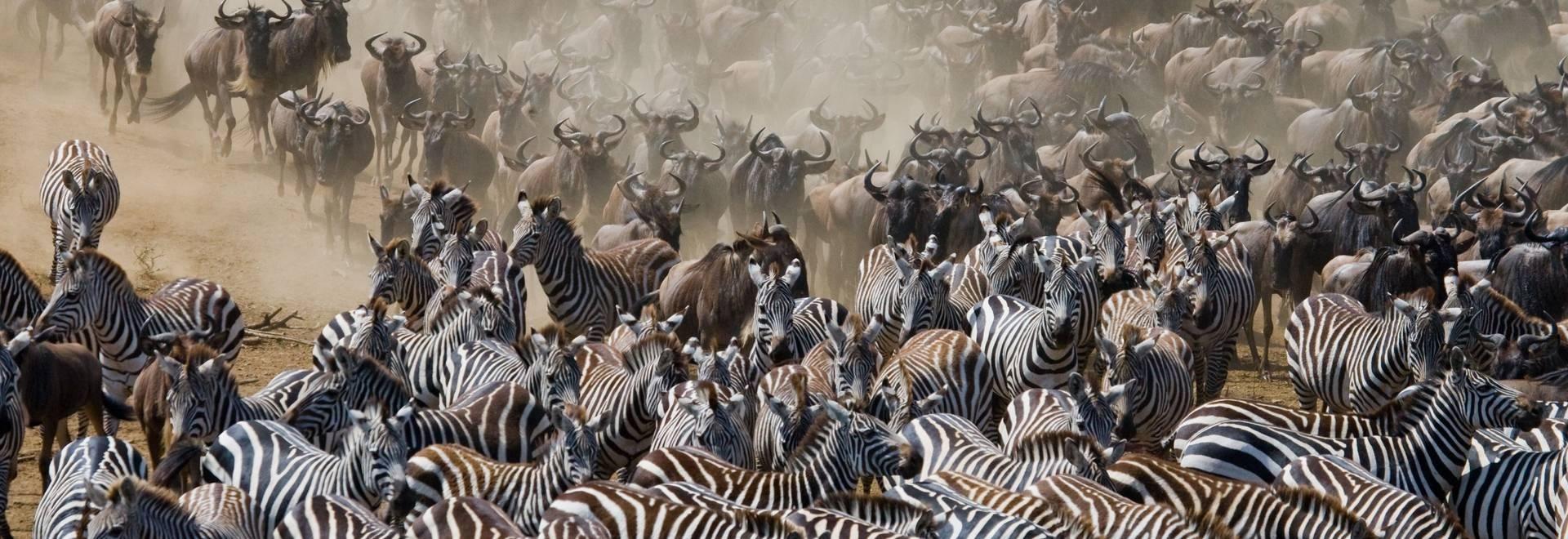Wildlife Holidays In Kenya - Naturetrek Calendar Holidays In Kenya