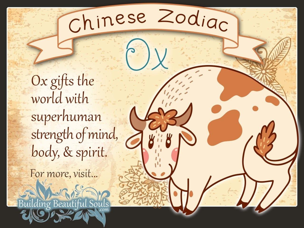 Chinese Zodiac Ox Child Personality & Traits | Chinese Chinese Zodiac Calendar Ox