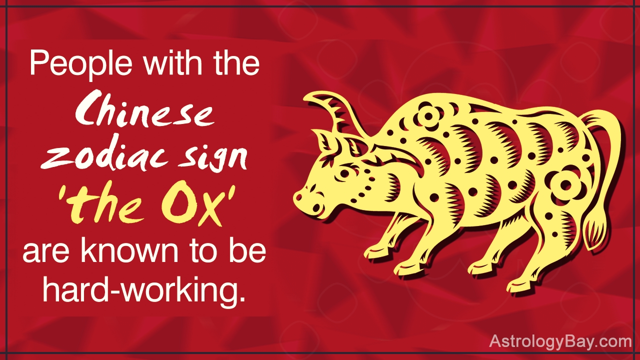 Detailed Information About The Chinese Zodiac Symbols And Chinese Zodiac Calendar Ox